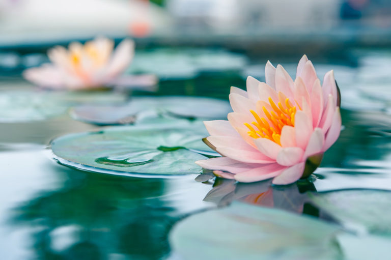 being in awe meditation series